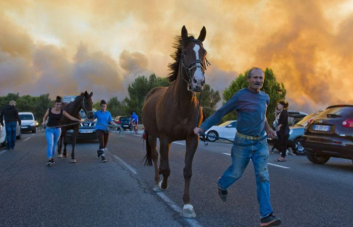 Tourists Flee As Wildfires Spread Across France (26 pics)