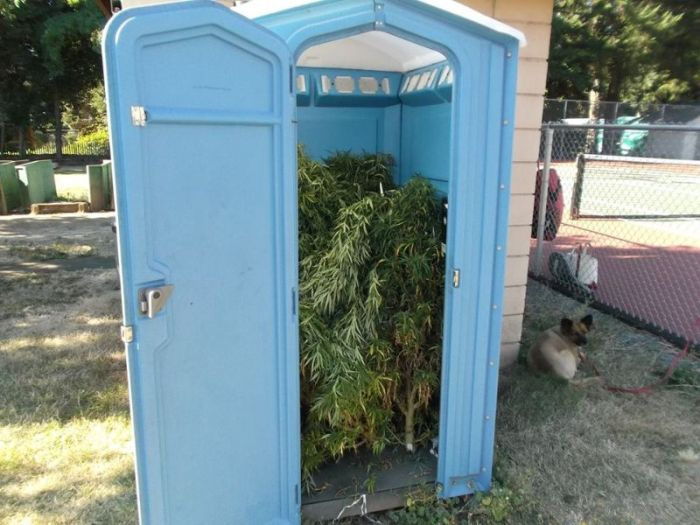 Police Find Porta Potty Packed With Marijuana Plants (5 pics)