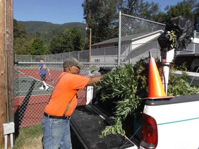 Police Find Porta Potty Packed With Marijuana Plants (5 pics)