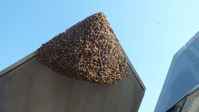 Honey Bees Try To Takeover A F-22 Raptor (5 pics)