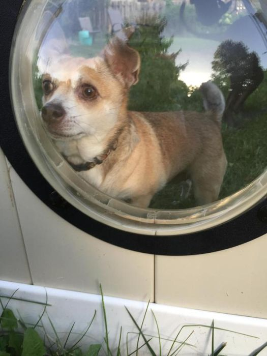 Porthole In Fence Gives Dogs A Window To The World (9 pics)
