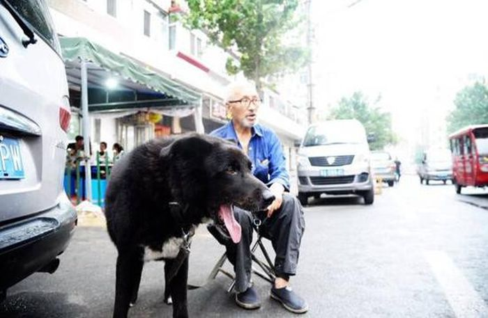 Old Man Leaves Life Savings To His Dog (3 pics)