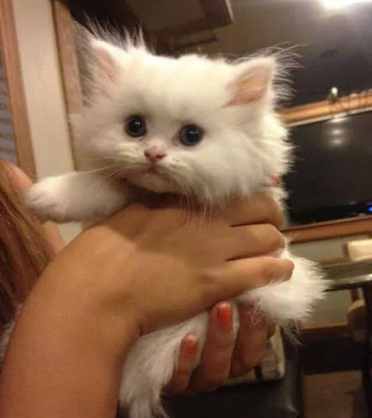 These Kittens Are So Cute You'll Want To Cuddle Them Forever (40 pics)