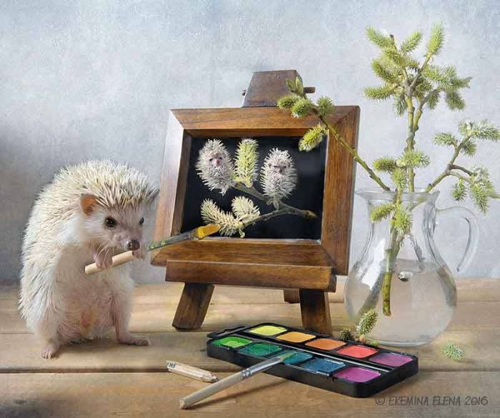 Photographer Exposes The Secret World of Hedgehogs (11 pics)