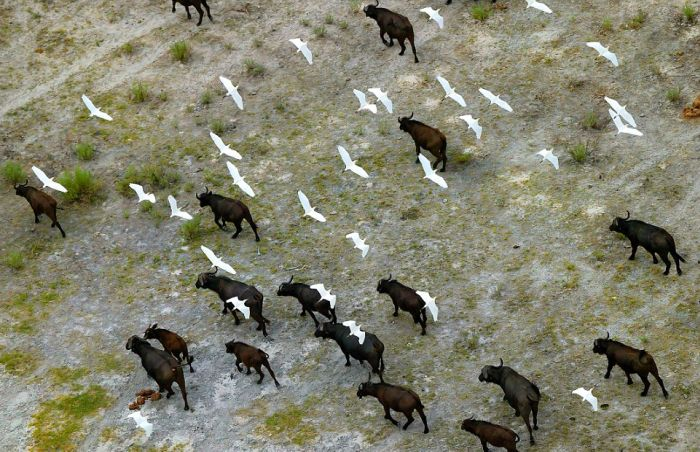 Amazing Aerial Photographs Show What Wildlife Looks Like From Above (15 pics)