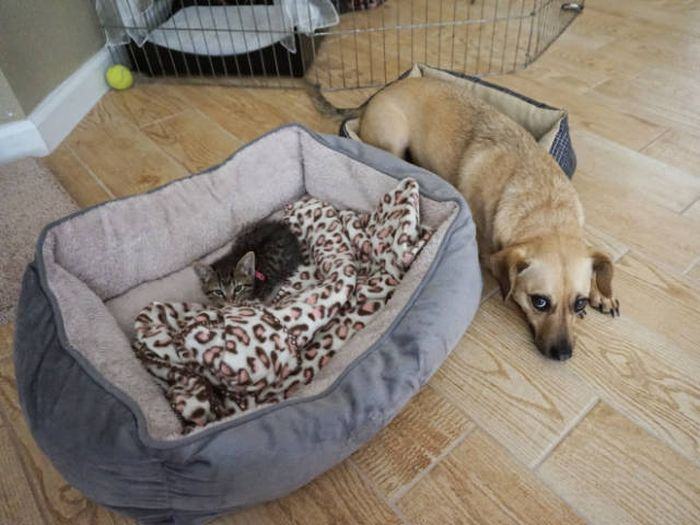 Cats Who Ruthlessly Stole A Bed From Their Dog Friends (18 pics)