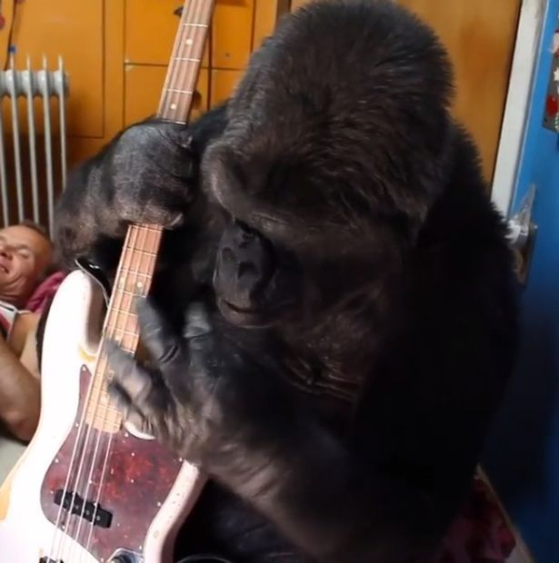 Red Hot Chili Peppers Bassist Flea Makes Friends With A Gorilla (3 pics)