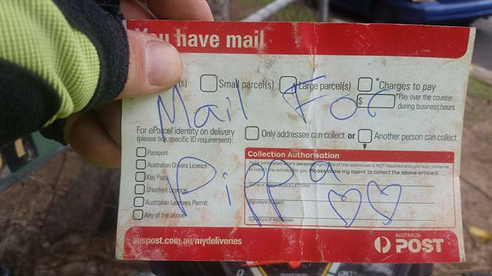 This Dog Absolutely Loves Getting Mail (3 pics)