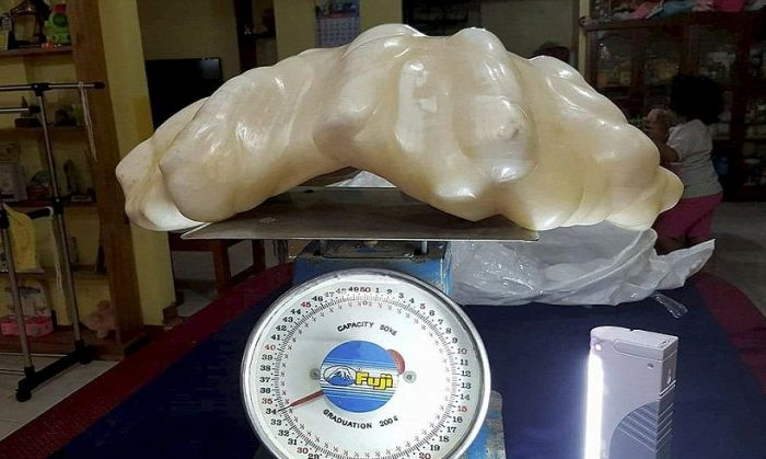Fisherman Hides Massive 34kg Pearl For Ten Years (4 pics)