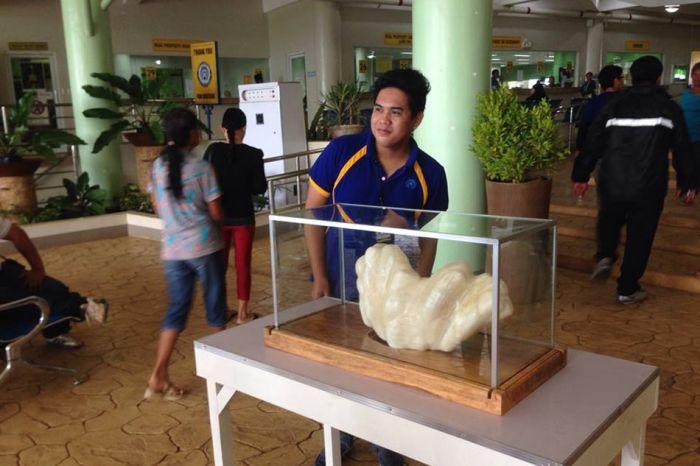 Fisherman Hides Massive 34kg Pearl For Ten Years (4 pics)