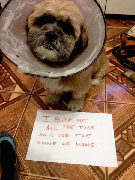 Dog Shaming At Its Finest (36 pics)