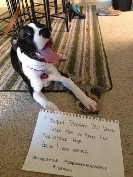 Dog Shaming At Its Finest (36 pics)