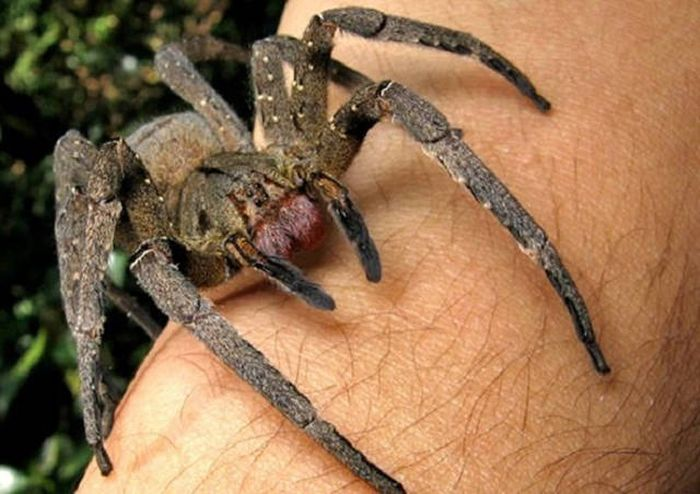 Poisonous And Venomous Creatures You Need To Make Sure You Don't Mess With (10 pics)