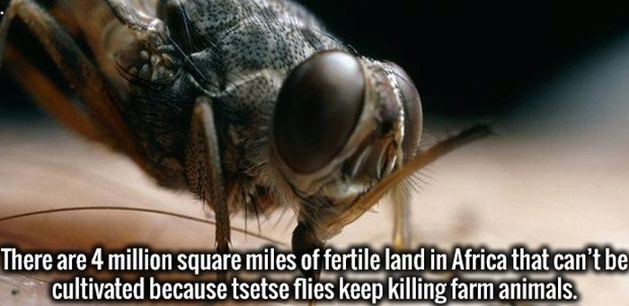 Random Facts That Will Give Your Brainpower A Boost (28 pics)