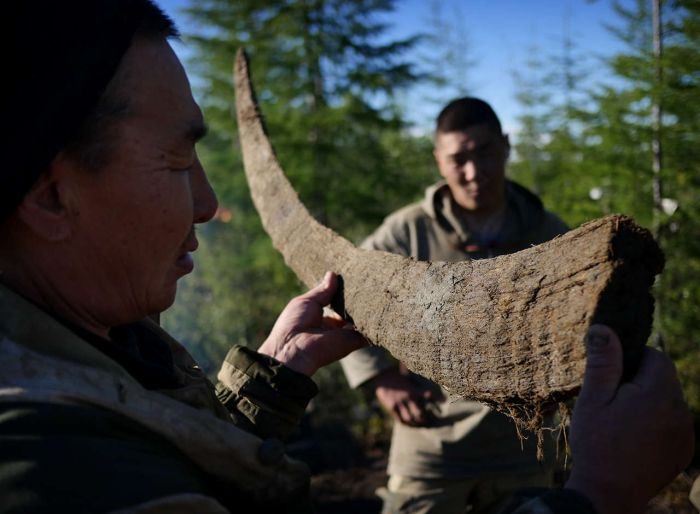 Hunters In Russia Make Millions Selling Prehistoric Remains On The Black Market (33 pics)