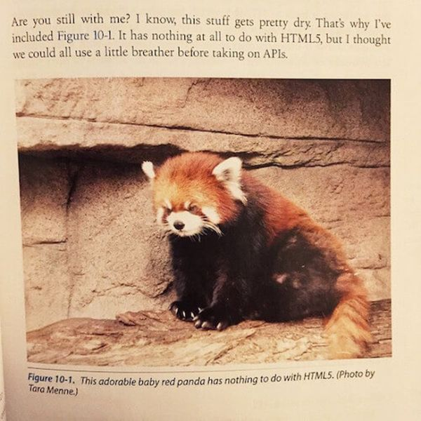 Strange Things That Have Been Spotted In School Textbooks (19 pics)