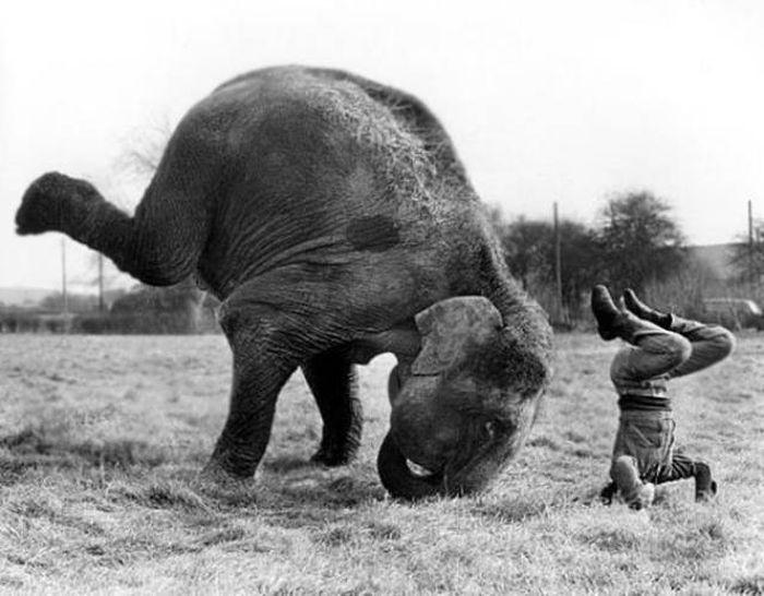 Animals That Were Definitely Born To Do Yoga (40 pics)