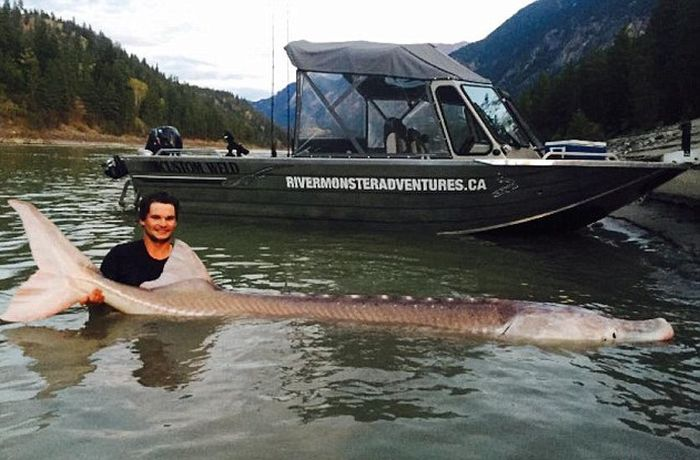 Canadian Fishermen Reel In A Legendary Catch (3 pics)