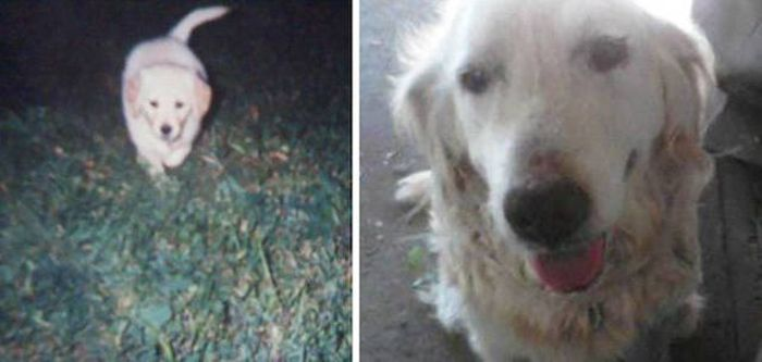 First And Last Pictures Of Pets That Will Tug At Your Heart Strings (30 pics)