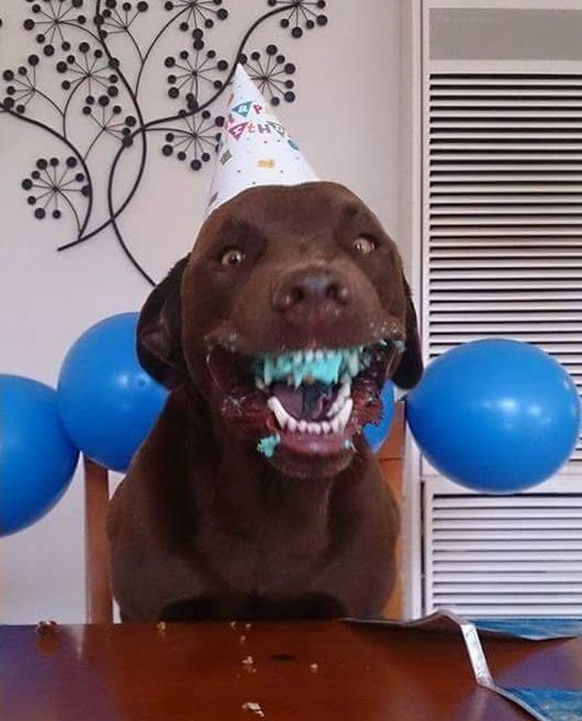 Funny Dog Gets A Special Birthday Party (2 pics)