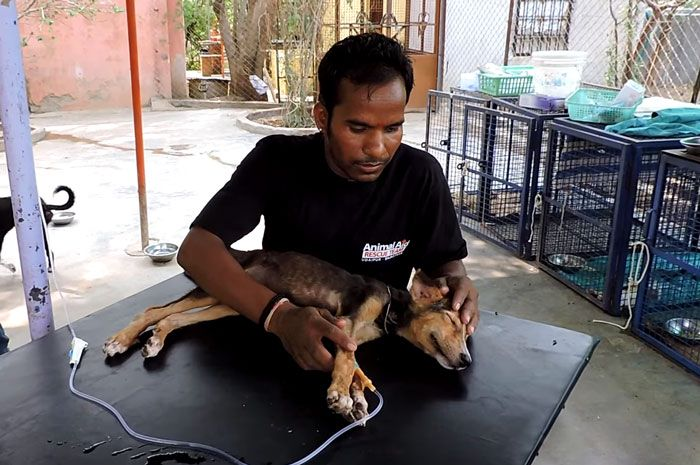 Puppy Signals Rescuers By Wagging Her Tail With Her Last Bit Of Strength (5 pics + video)