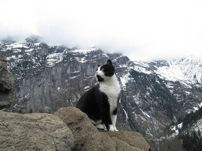 Cat Helps Lost Hikers Find Their Way In The Swiss Mountains (5 pics)