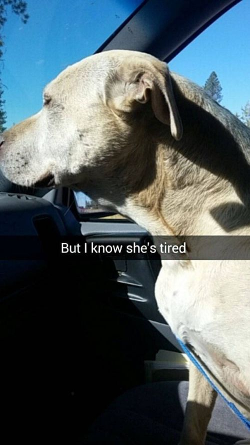 Girl Snapchats The Last Day With Her Dog And It's Heartbreaking (19 pics)