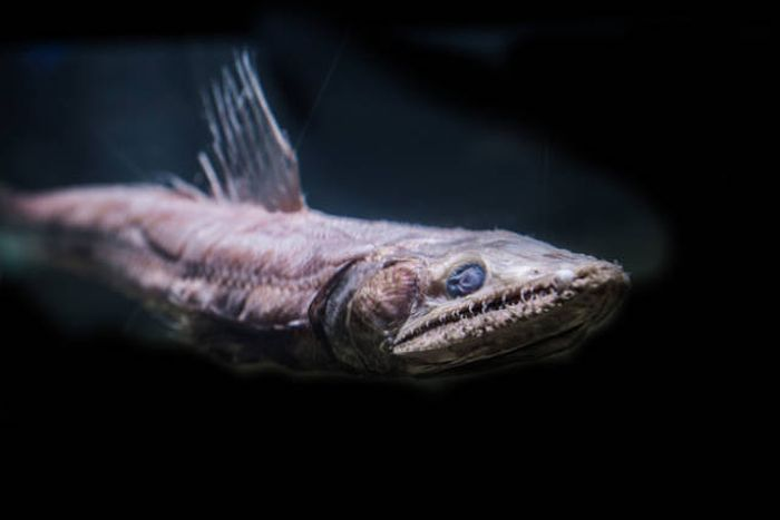 Terrifying Creatures That Lurk In The Depths Of The Ocean (25 pics)