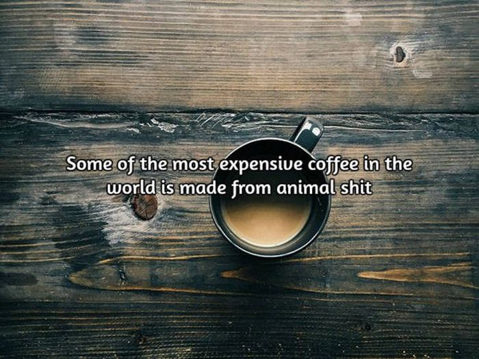 Interesting Facts About Coffee, The World's Most Important Drink (20 pics)