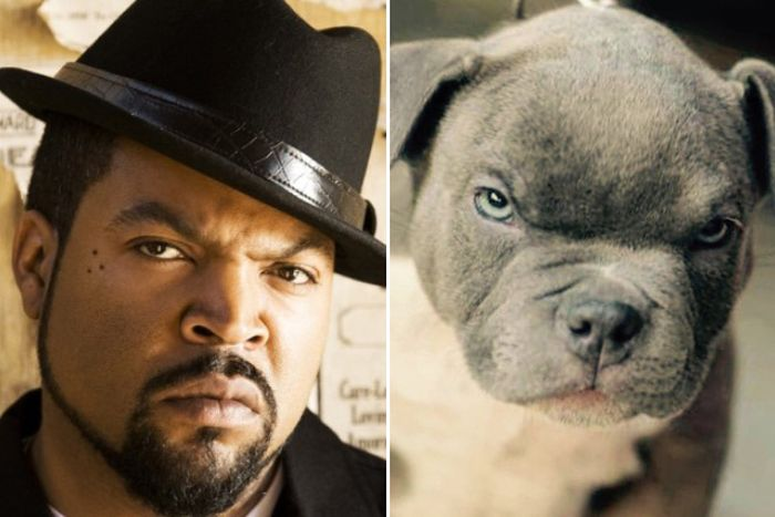 Celebrities Get Compared To Their Dog Look-Alikes (15 pics)