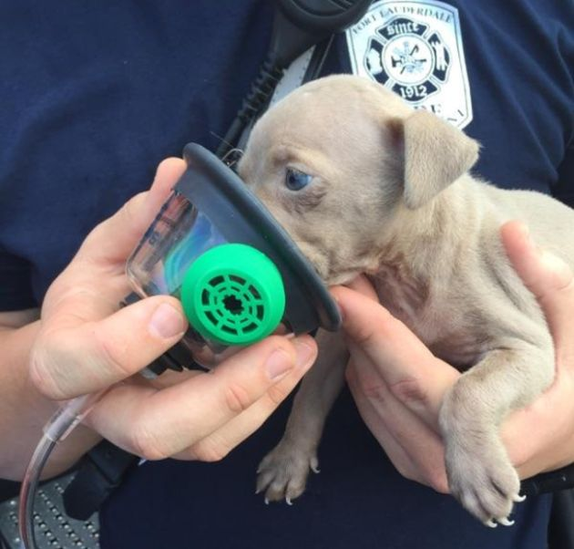 Firefighters Resuscitate Adorable Puppy Found In House Fire (4 pics)