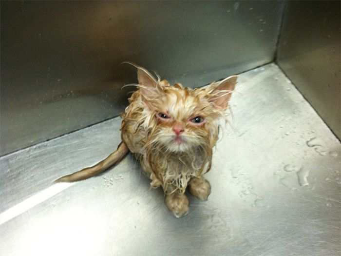 Angry Cats That Most Definitely Want You Dead (18 pics)