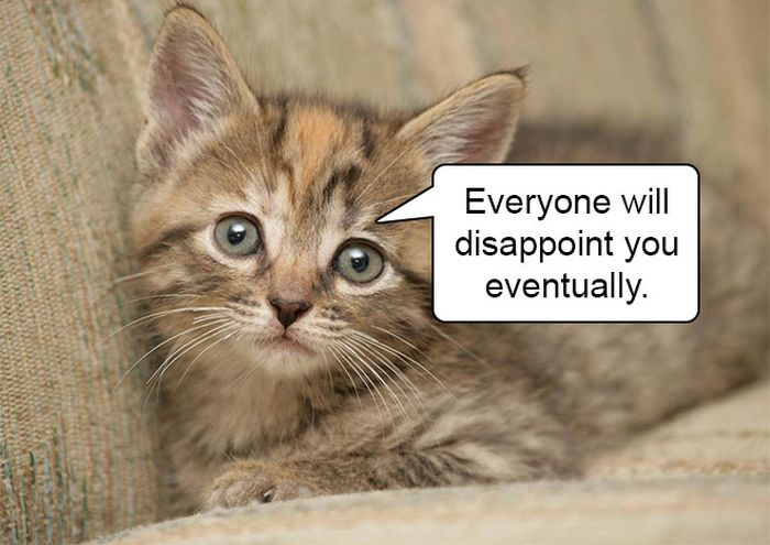 Harsh Truths From Cute And Cuddly Kittens (14 pics)