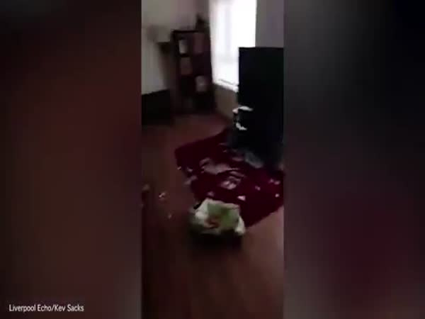 Great Dane Looks Innocent As Owner Finds Bag Of Food Torn Open