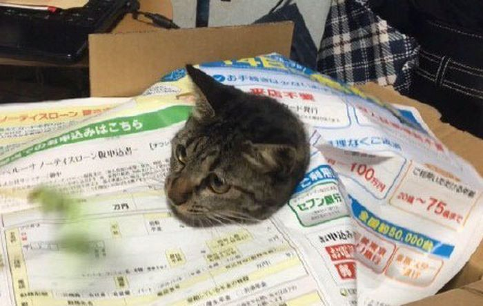 Cat Panics After Getting Trapped (4 pics)
