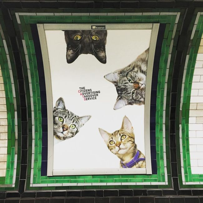 Citizens Replaced Every Ad At A London Underground Station With Cats (7 pics)