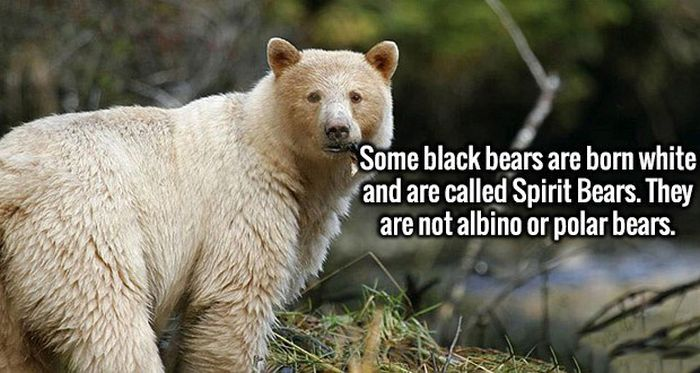 Fresh Facts To Cram Into Your Brain (19 pics)