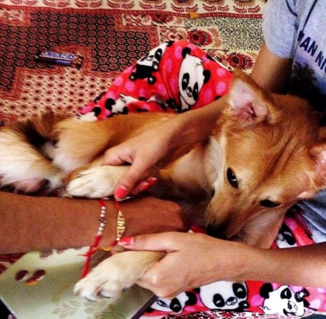 Woman Turns Down Arranged Marriage Because Of Her Dog (5 pics)