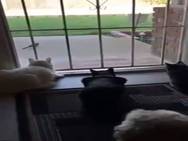 Dog Sneaks Up On Cats Hilarity Ensues