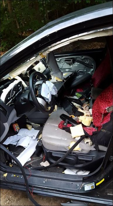 Bear Tears Car Apart While Looking For Food (9 pics)