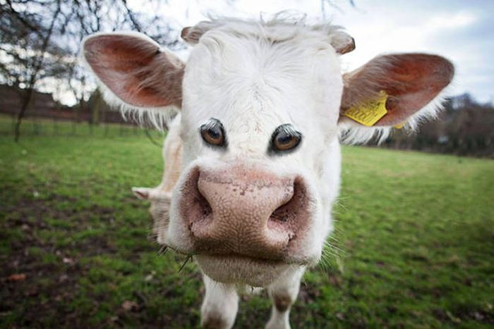 What Animals Would Look Like If Their Eyes Were Right At The Front (23 pics)