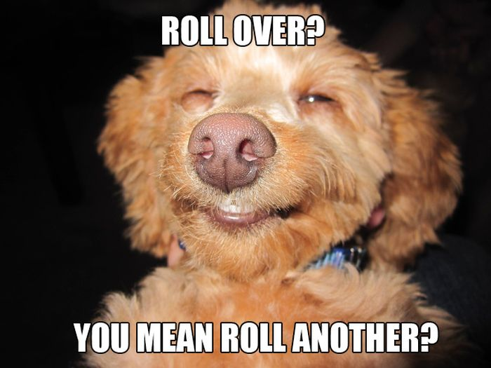 Stoner Dogs That Got Into The Weed Stash (12 pics)