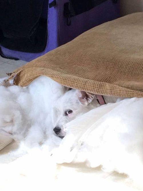 Cute Little Puppy Has The Power To Cause Massive Destruction (11 pics)