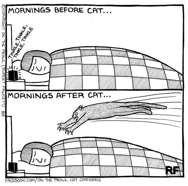 Cute Illustrations That All Cat Lovers Will Relate To (18 pics)