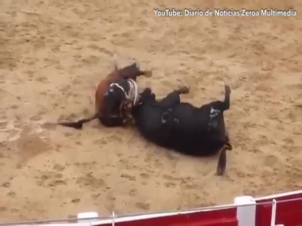 Two Bulls Die In Shocking Clash Of Heads In Arena In Northern Spain