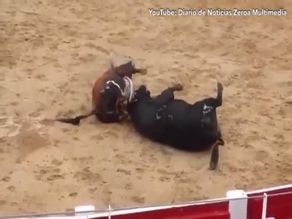 Two Bulls Die In Shocking Clash Of Heads In Arena In Northern Spain
