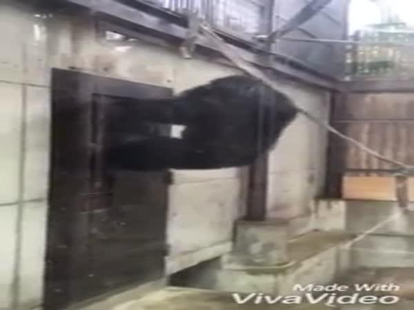Monkey And A Door