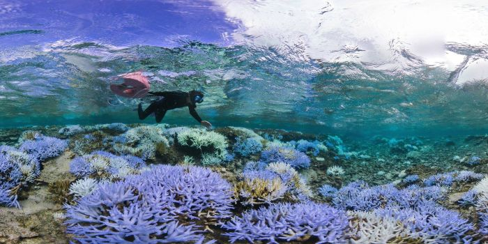 How Okinawa Coral Has Been Damaged By The Effects Of Coral Bleaching (8 pics)