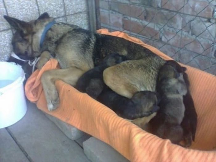 Dog And Puppies Found In Cemetery In Serbia (8 pics)