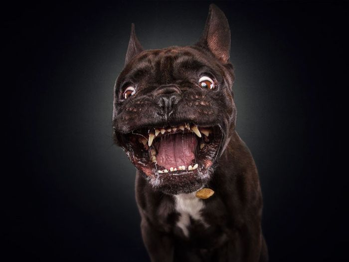 Dogs Make Hilarious Faces While Trying To Catch Treats (30 pics)